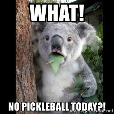 koala no pickleball today